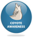 Coyote Awareness