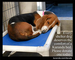 Donate a Kuranda Bed to Kane County Animal Shelter